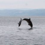 Dolphins, shearwaters, sharks and feast ingredients